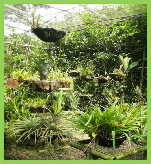 Activa tu mente jard n bot nico de la unet for Jardin botanico numero telefonico