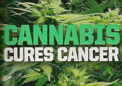 óleo de Cannabis - cannabis cura cancer