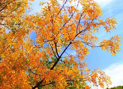 Fresno en otoño