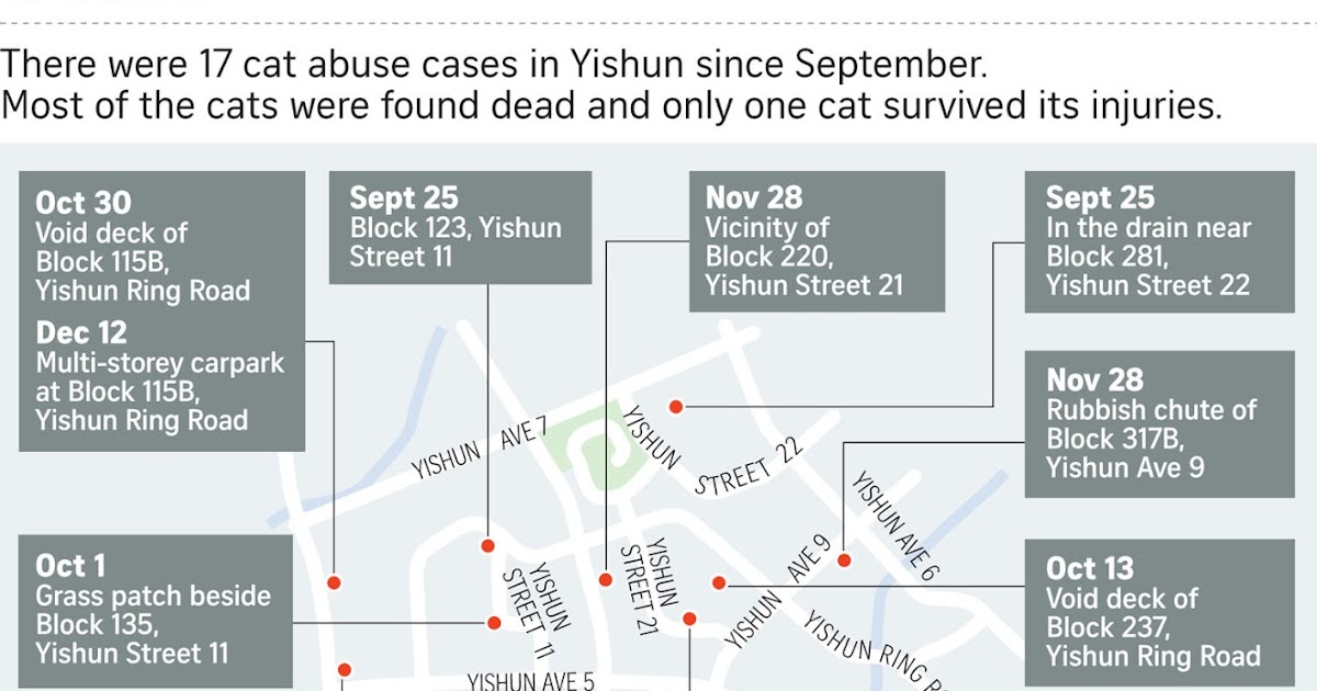 if only singaporeans stopped to think cat cruelty in yishun