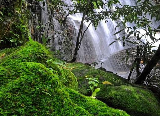 temir_valley_malaysia