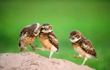 curiosidades del mundo fotos de los animales más graciosos del mundo