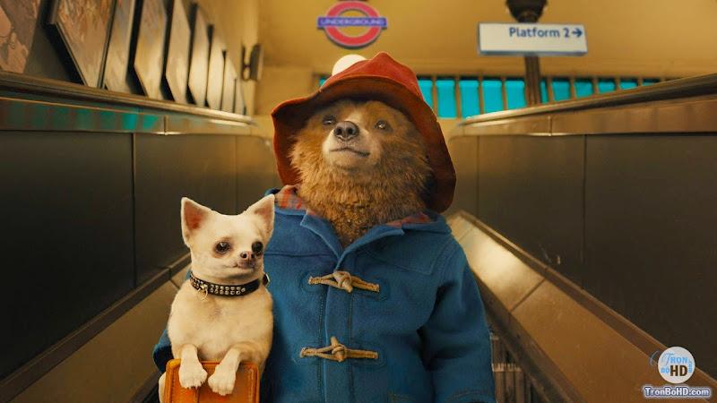 Gấu Paddington - Image 2