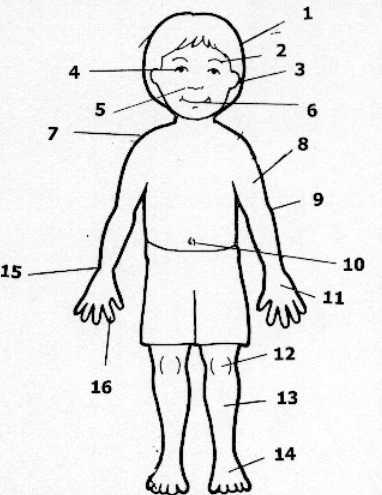 Cuerpo Humano Animado Sin Nombres Wwwimagenesmicom