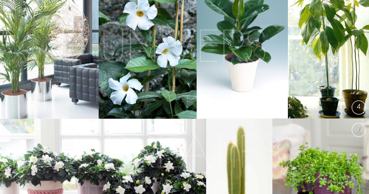 univers creatifs les plantes qui font du bien notre int rieur. Black Bedroom Furniture Sets. Home Design Ideas