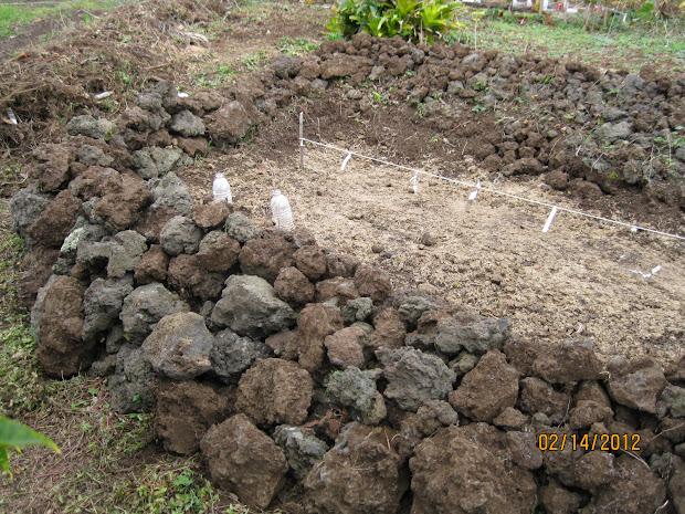 pumpkinmania hawaiian garden