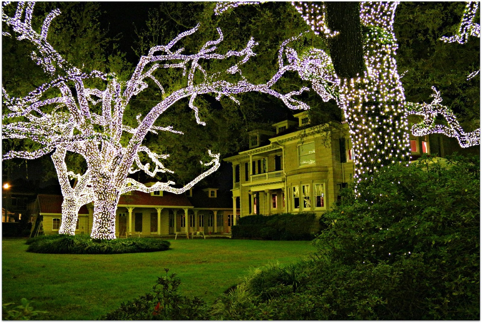 Happy Holidays in NOLA! | Tulane University Admission Blog - Jeff ...