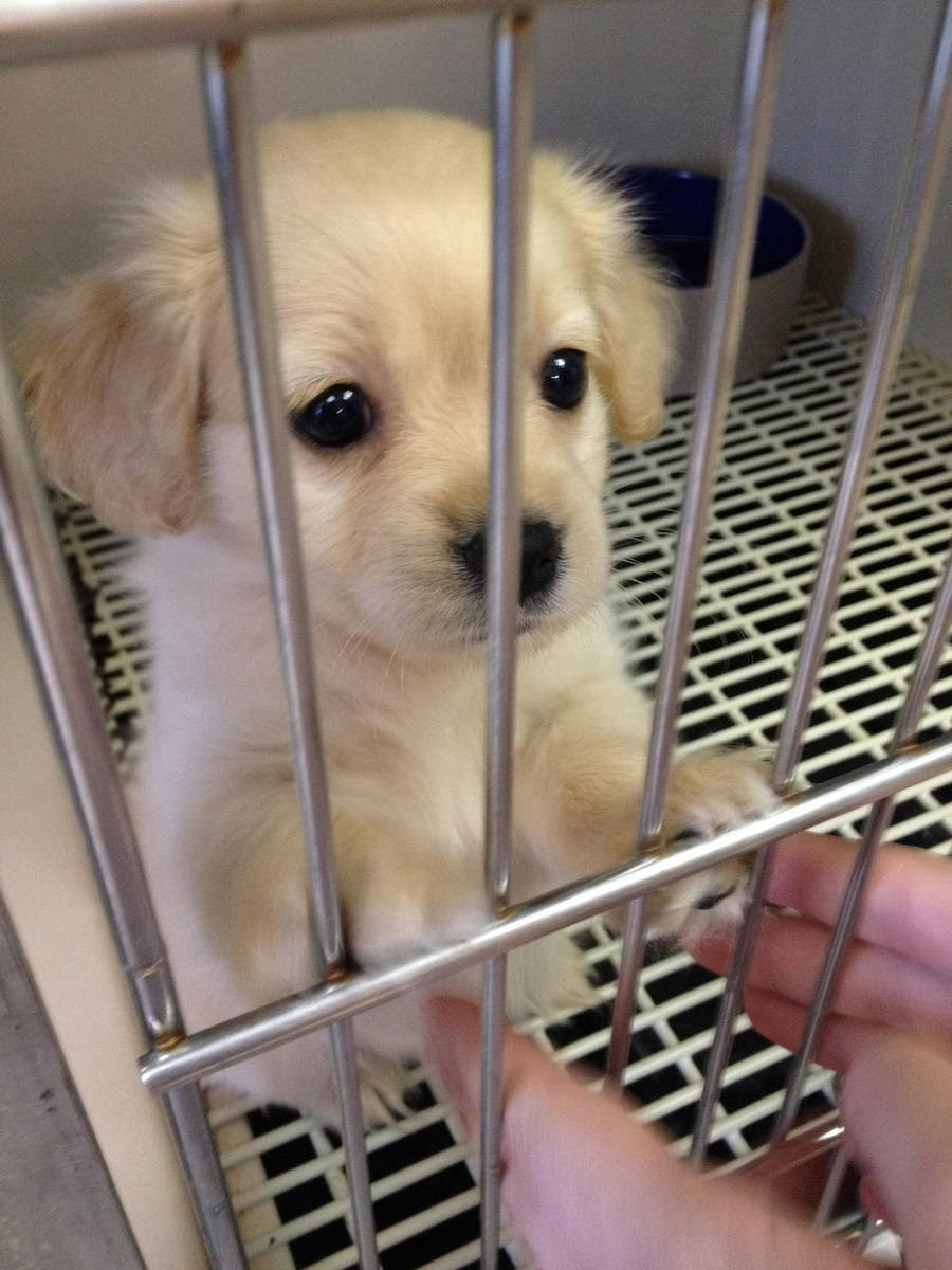 Cute dogs - part 6 (50 pics), cute puppy inside a cage