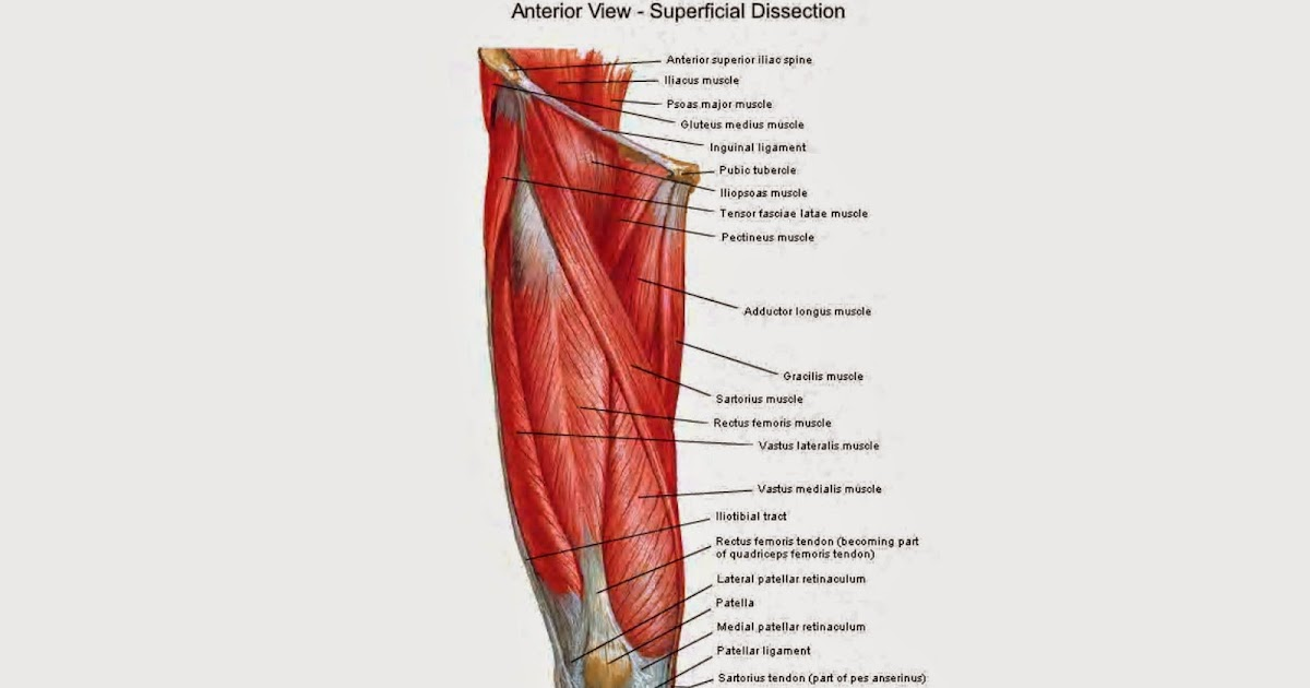 The Late Ballerina: Tibial torsion... taping?