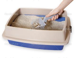 6 Langkah Mencuci Pasir dan Litterbox