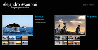 The Nature Photographer Alejandro Avampini, updates his website