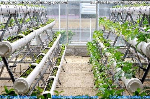 Modern Agriculture of Hydroponic Vegetable_Green_House Indoor Gardening System