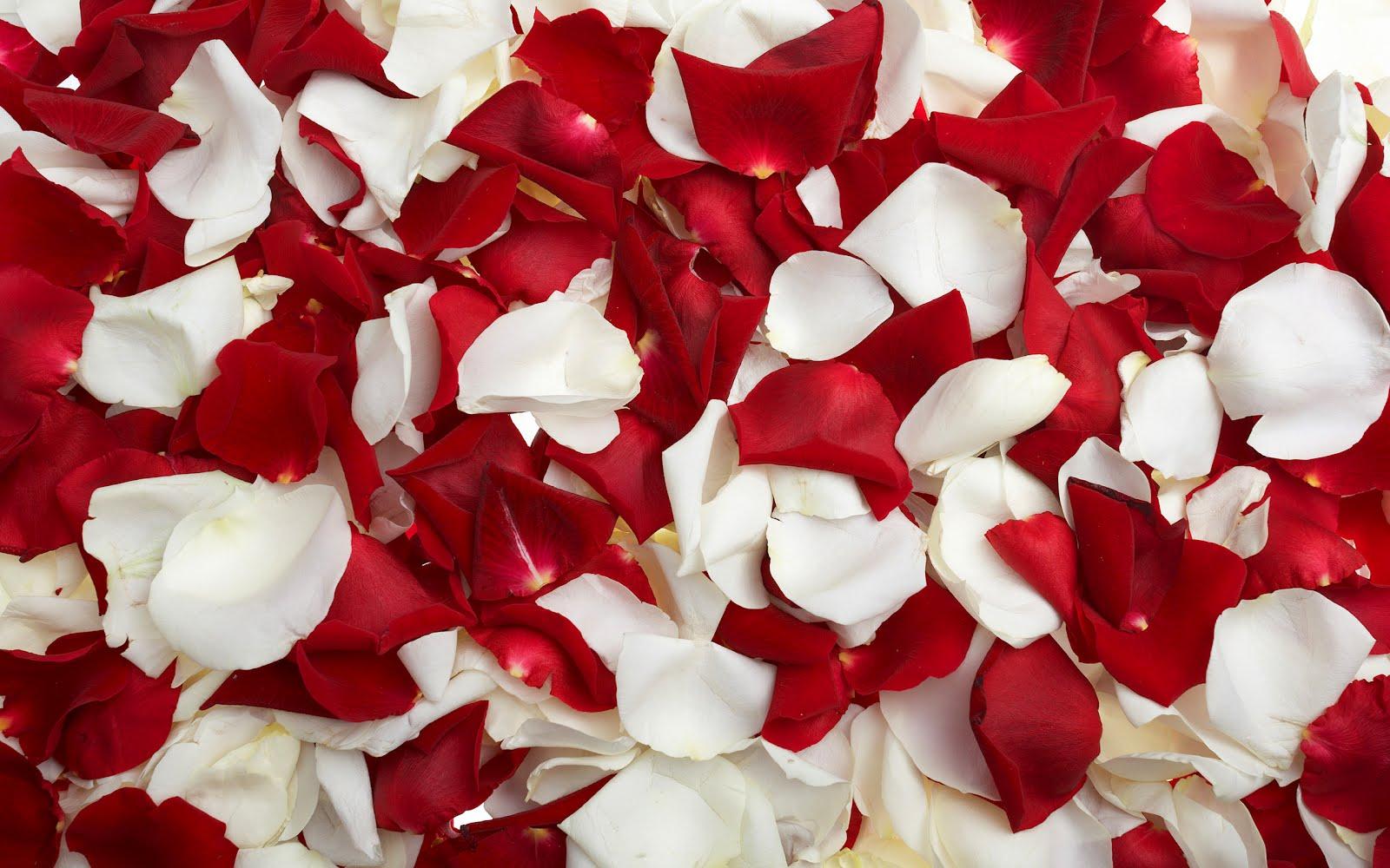 Imagens De Flores Vermelhas Para Facebook - Papel de Parede Coração de Rosas Vermelhas
