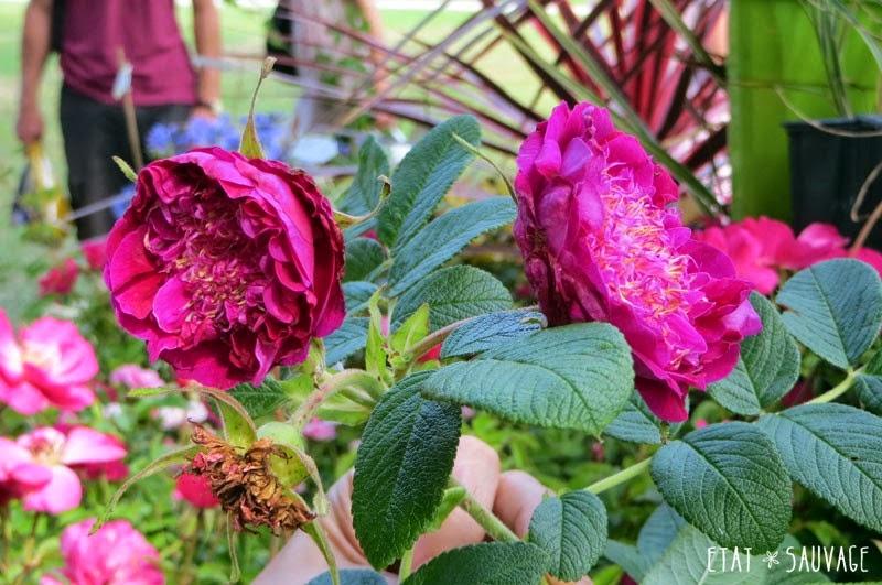 Derri re les murs de mon jardin octobre 2014 - Derriere les murs de mon jardin ...