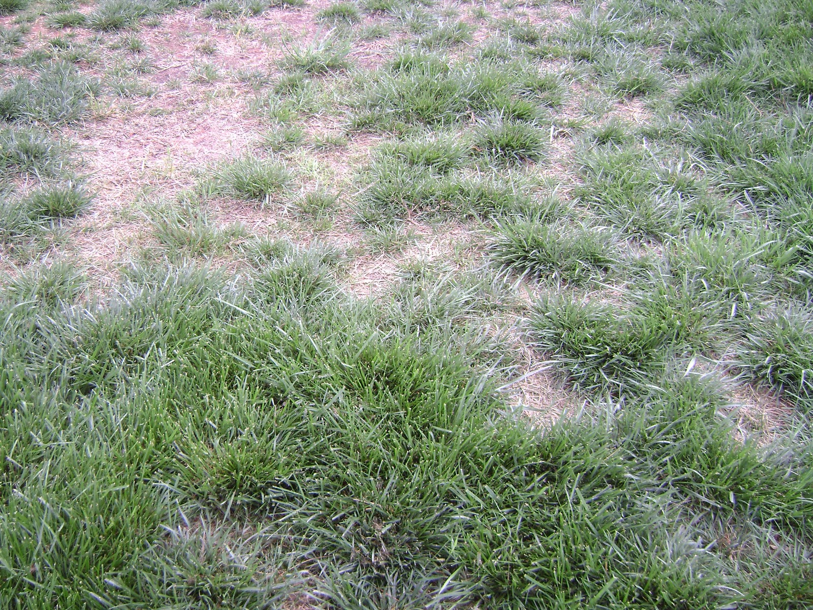 how to fix grass from dog urine