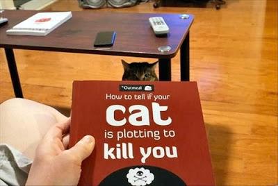 Funny/Cute Animal Pics - Page 5 Tumblr_mfv5w3Jug61qb7h3no1_500