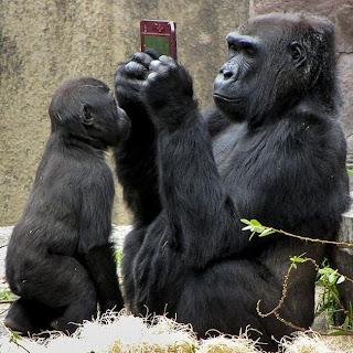 http://2.bp.blogspot.com/-lajP4HYBDtY/TfUQYFfCkEI/AAAAAAAAC4s/KcZ4m4HfKaY/s320/gorilla+spogu%25C4%25BCojas.jpg