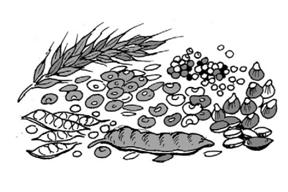 Proses Tumbuhan Hijau Mengolah Makanan