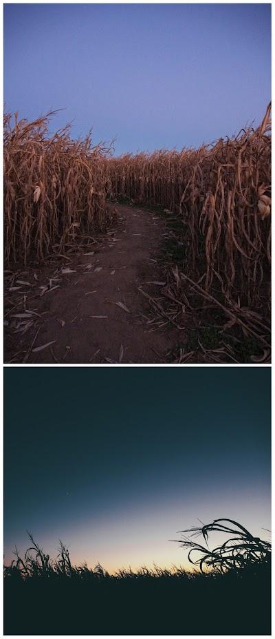 Pat David G'MIC montage aligned images fit