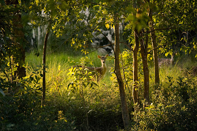 Sundarbans Delta Wildlife National Park India West Bengal
