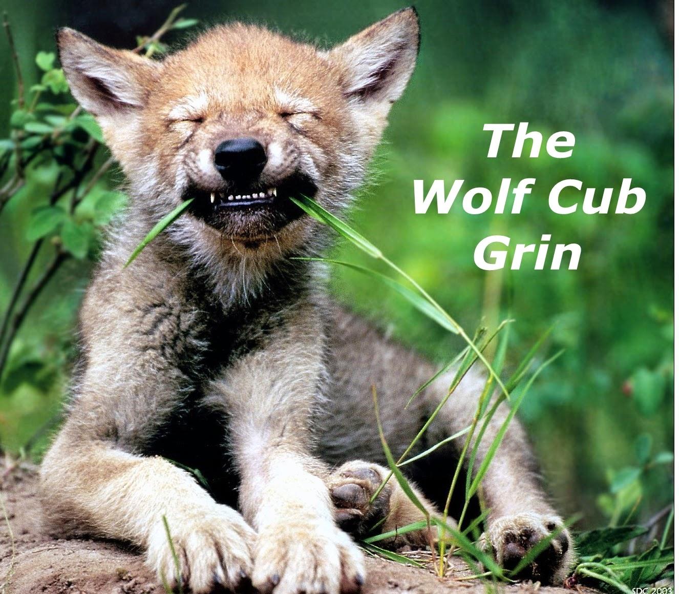 Wolf cub grin