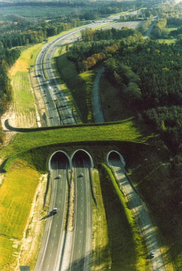 wildlife overpasses, green bridges, ecoducts