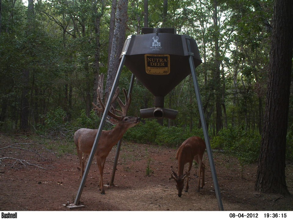 funnel head direct buck texas feeder sale hunting l protien for with gallon protein down boss feeders tube products