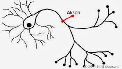 Fungsi Akson