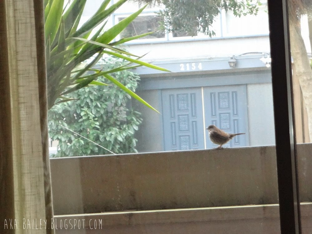 A bird on my porch, checking out my palm tree!