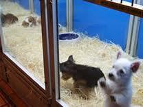 Παράδειγμα προς μίμηση! Pet shop στην Αυστραλία αρνήθηκε να πουλήσει κουτάβια τα Χριστούγεννα!