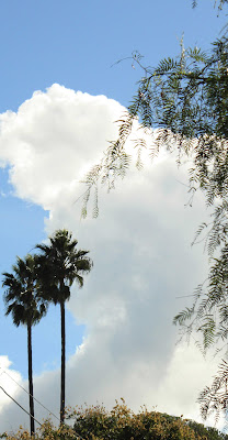 Winter, palms, photograph, cloud, california, warm, plants, art, arte, S. Myers, Sarah Myers, blue