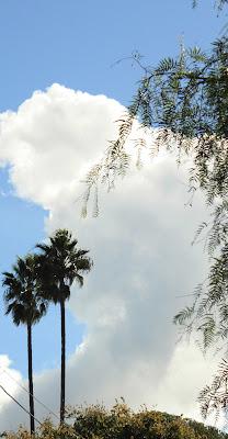 Winter, palms, photograph, cloud, california, warm, plants, art, arte, S. Myers, Sarah Myers, blue