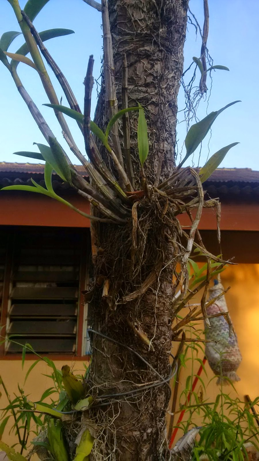 how to grow orchids, orchids gardening,