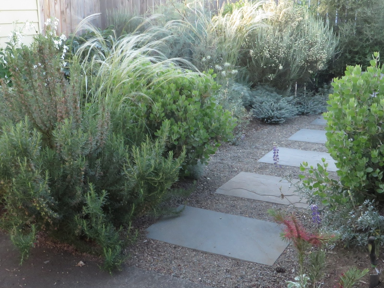 How to plant ground cover between pavers - Between The Rosemary And The Hebes In The Back There Are A Dozen Incredible Plants The Simplicity Of Design Works The Large Pavers Are