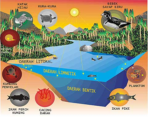 ... Ekosistem, Aliran Energi, dan Siklus Materi dalam Ekosistem Kelompok 1
