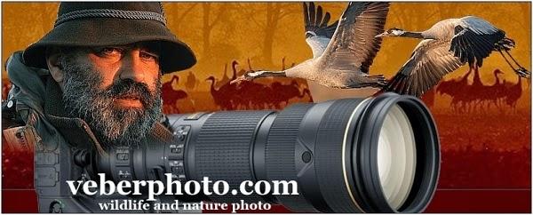 veberphoto.com