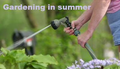 Plants & Tips for Gardening in Summer