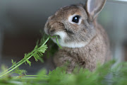 Bunnies:   Not Just For Easter Anymore