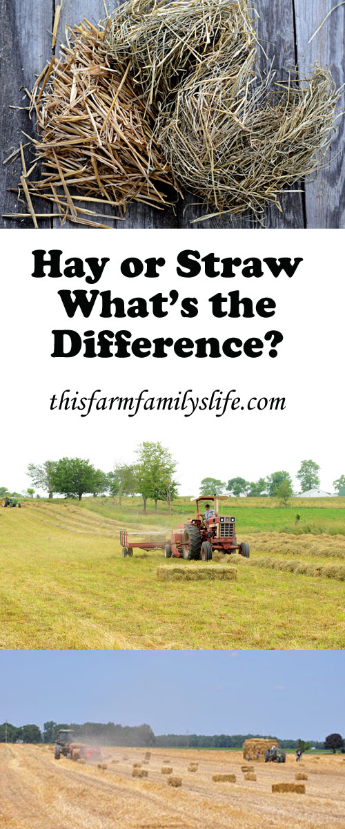 Every wondered what the difference is between hay and straw?  Check out this post to find out the answer to a common question.