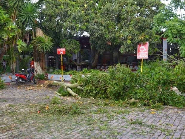 Árvore também desabou por conta dos ventos fortes (Foto: Anderson Oliveira/Blog do Anderson)