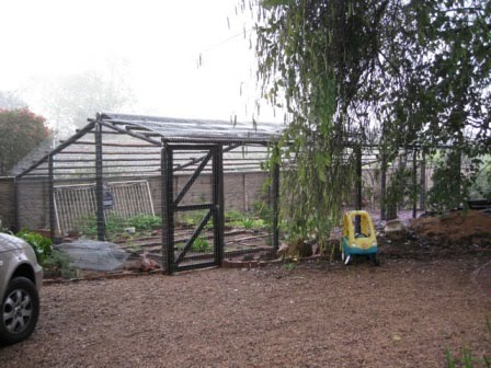 Monkey Proof Organic Vegetable Cage Kathryns Foodies Channel