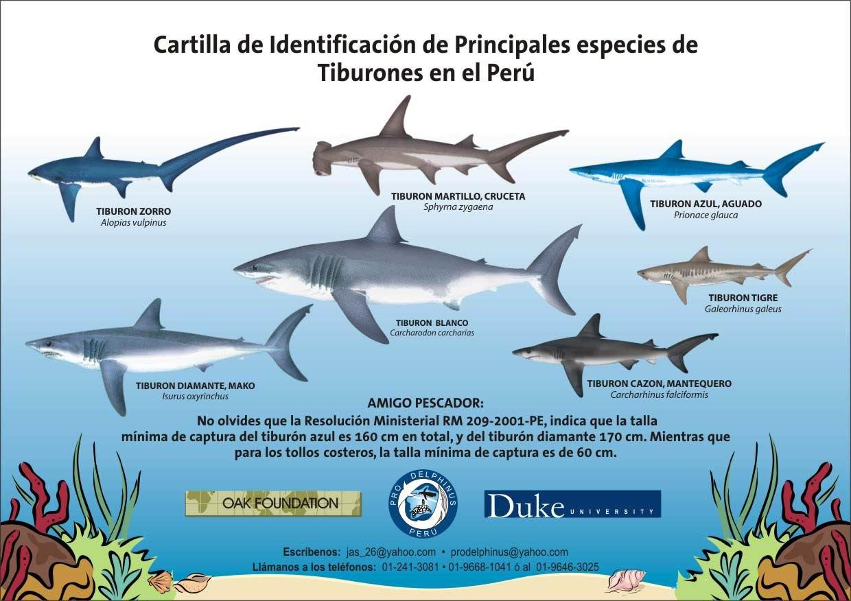 Tipos de tiburones este blog se trata sobre los tipos de for Cuantos tipos de arboles hay en el mundo