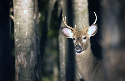 Showcasing the DNR: Northern Michigan deer hunting headed for a comeback