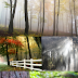 19 Free Forest Stock Images