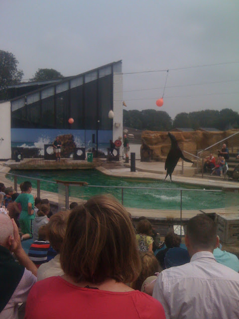 seal show whipsnade