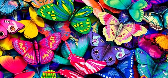 Bohemio Mundi Es cierto el mito de que las mariposas ya no