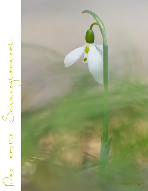 Staudenbeet - Blüte im Dezember