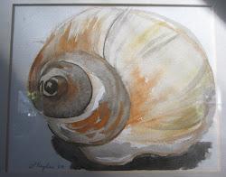 Moon Shell Watercolor