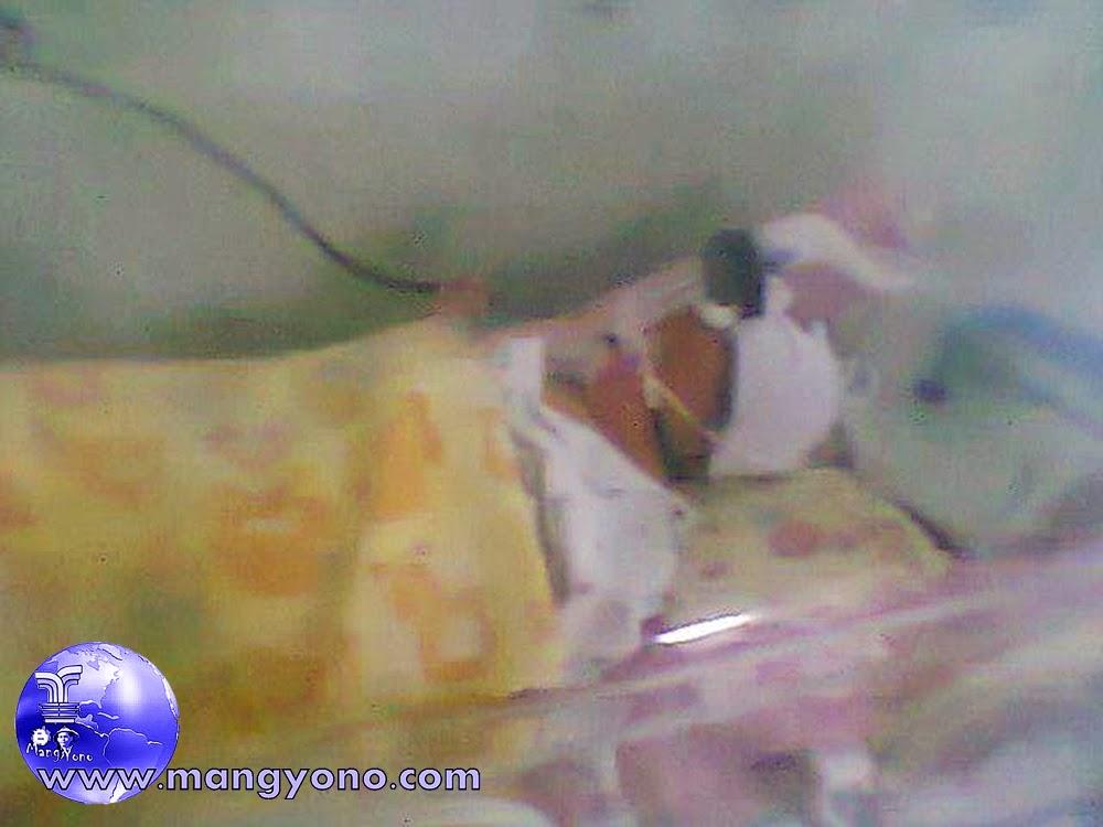 Poto saat dirawat di Ruang NICCU RS. Efarina Etaham, Purwakarta.
