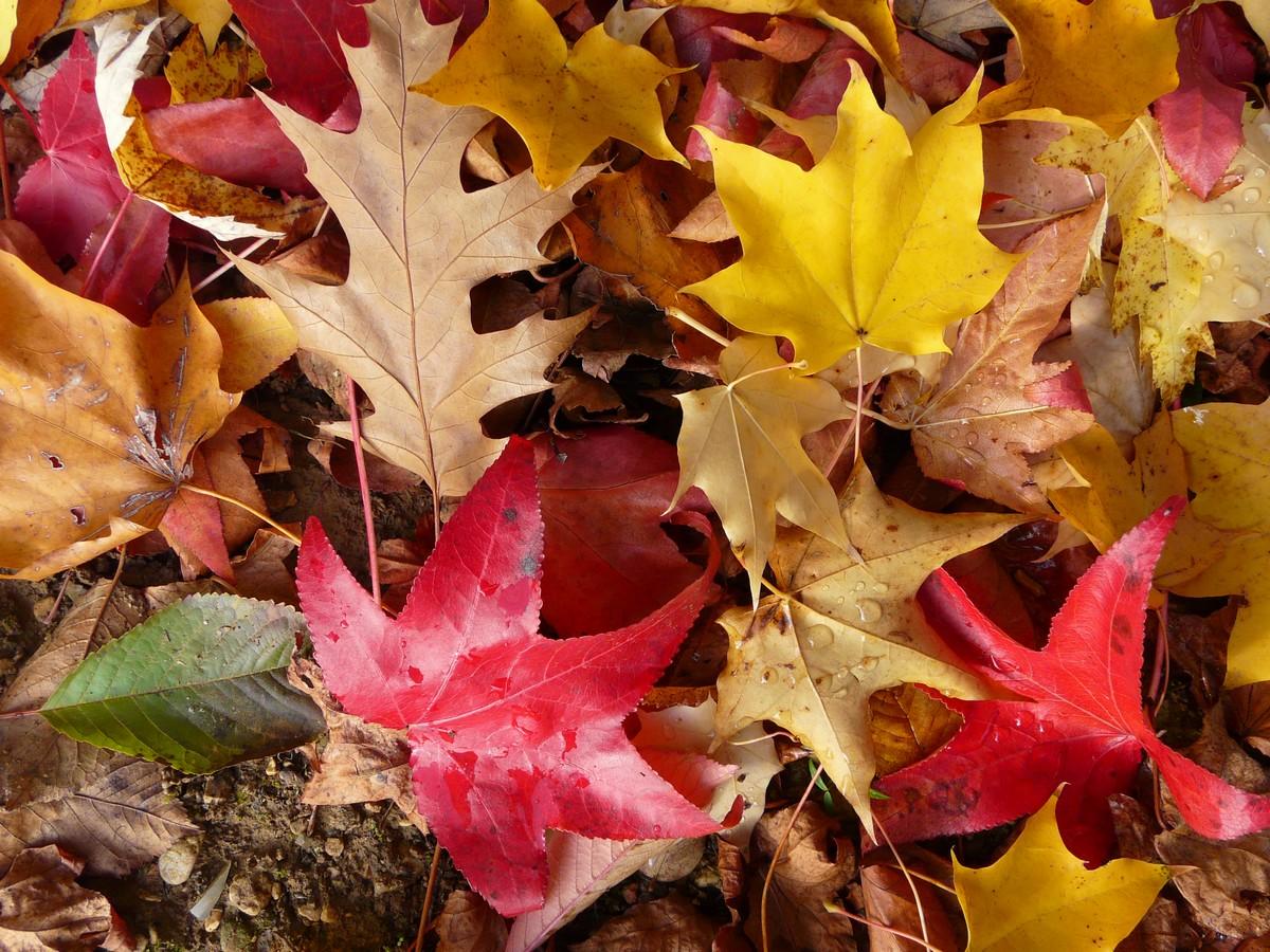 Montreur d 39 images feuilles d 39 automne - Image feuille automne ...